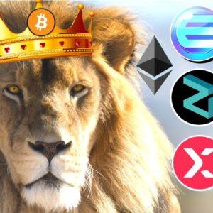 Bitcoin is APEX Predator BUT Ethereum, Elrond, Enjin, VeChain, StormX, Tron, XRP + Zilliqa SOARING 🚀