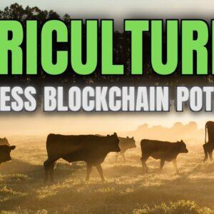 Dimitra: Optimizing Farming Yield with Blockchain Tech & Machine Learning 🌱